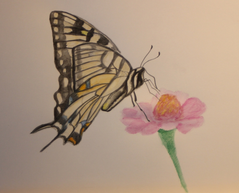 Watercolor Butterfly done in watercolor pencils.